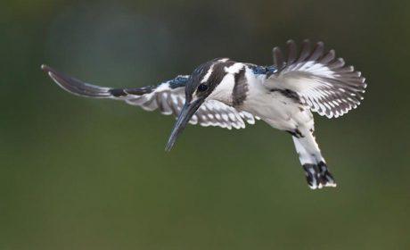 News, River Valley Nature Reserve, Blog, Latest News, Updates